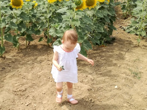 barefoot - slnečnicové pole