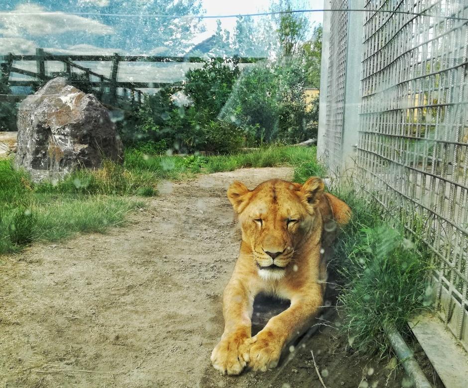 Malkia Park - divé zvieratá